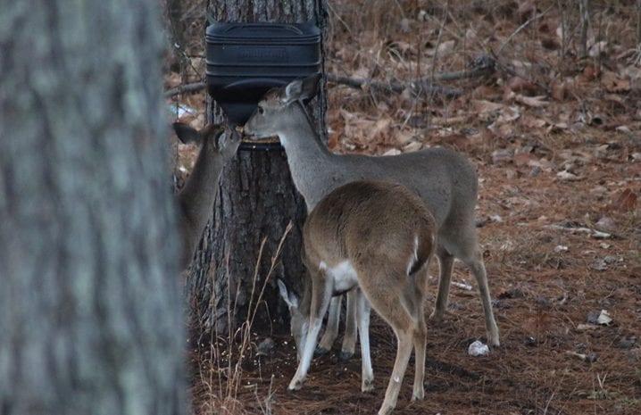 _60_Deer2